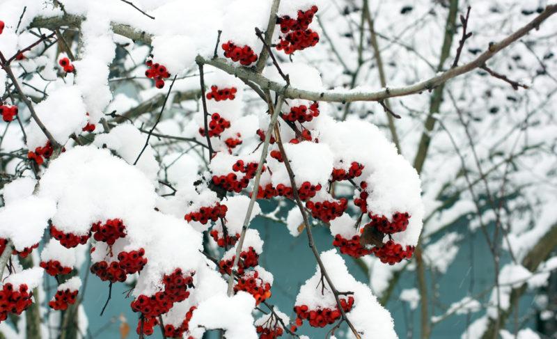 Рыбинск накрыло снегом. Фоторепортаж