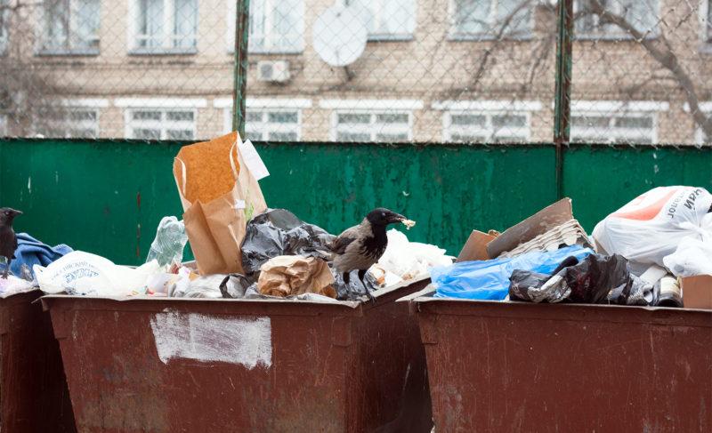 «Нам прокладки не нужны»: депутаты больше двух часов обсуждали (не)вывоз мусора