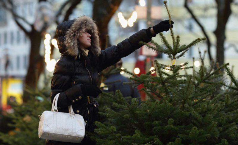 Где купить ёлку в Рыбинске?