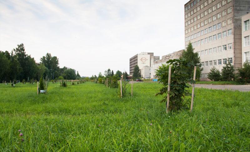 Серафима, здравствуй, или о траве да клумбах