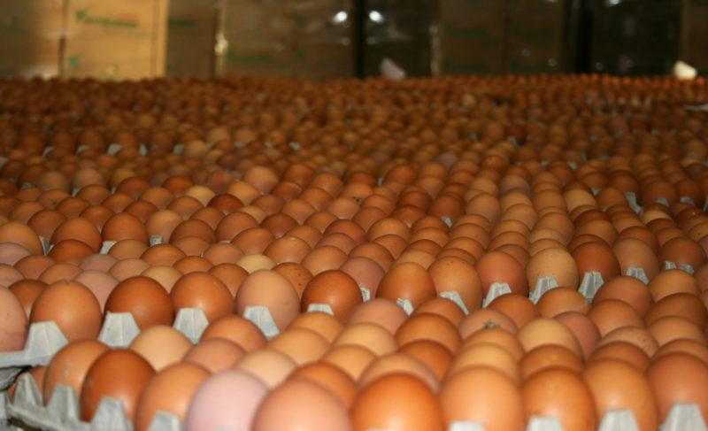 «Волжанин» постарается взять планку в 1,5 миллиарда яиц ежегодно