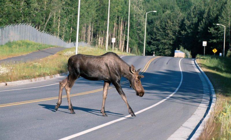 Почему дикие животные приходят в город и что делать при встрече с ними? Разбор