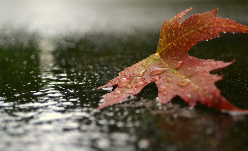 Дождливо и холодно. Какие сюрпризы готовит погода?