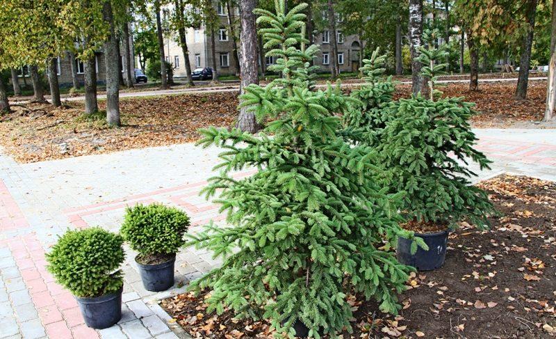 Благоустройство с опозданием: подрядчик срывает сроки работ в парке на Черняховского