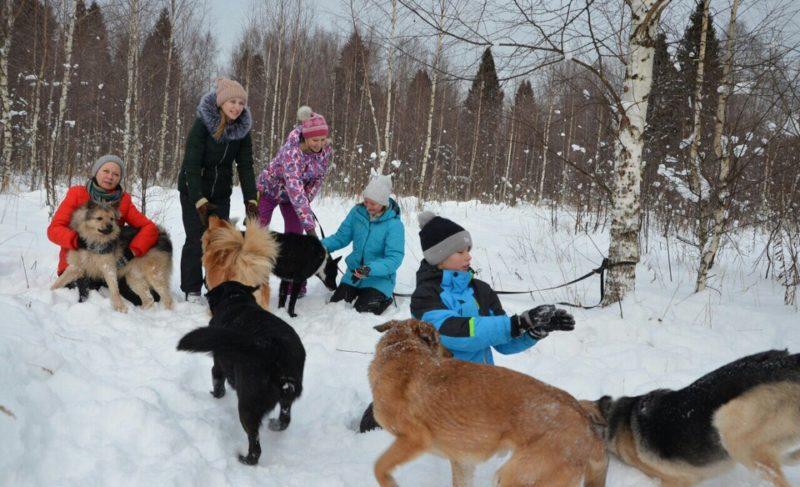 «Бродячая проблема»: как в Рыбинске помогают бездомным животным