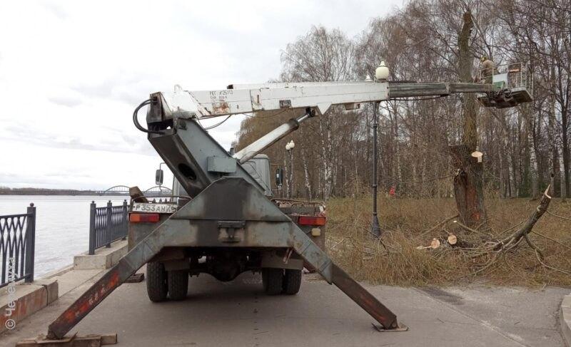 Вадминистрации Рыбинска прокомментировали выпиловку деревьев вВолжском парке